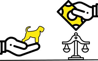 Czarny terier – zakup psa okiem prawnika